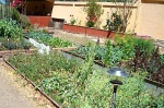 Organic garden. A solar lamp illuminates the walkway.